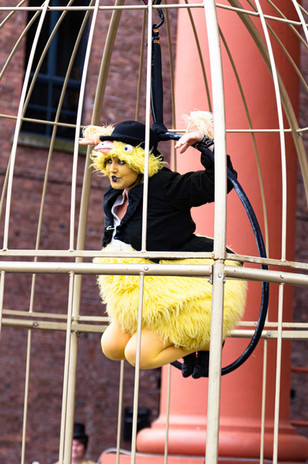 canary sit.jpg