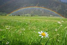 Countyside Rainbow Field Landscape.jpg