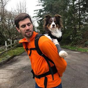 Cinder's Journey: Recovering From Metacarpal Fractures, Weeks 4-8