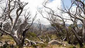 Canberra Times: Voice of Real Australia - Can't see the trees for the forest