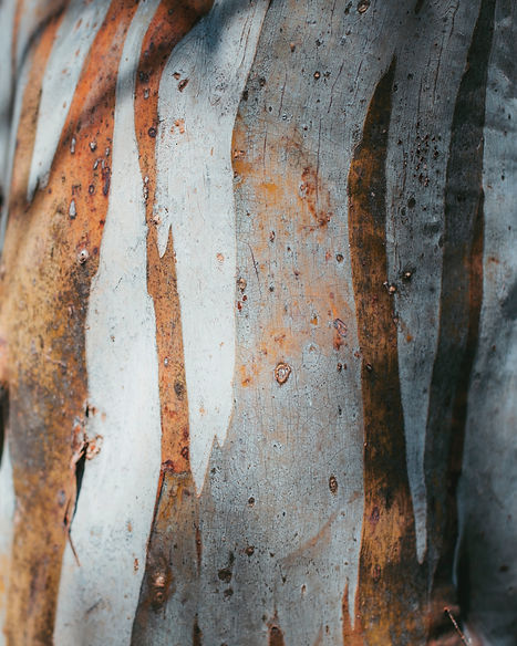 Snowgum Texture by Jade Stephens