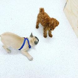 puppy play training bulli wollongong.jpg