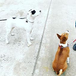 dog training.jpg