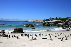 電動バイク世界一周南アフリカのボルダーズビーチのペンギン