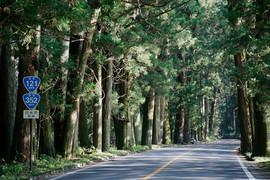 リトルカブ国道全制覇ツーリング、栃木県の日光街道