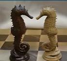 Seahorse Knight