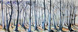 Corbar woods