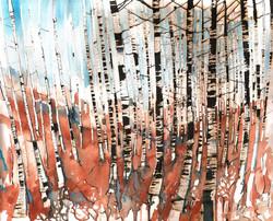 Birch trees in Goyt valley
