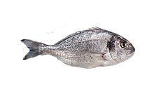 seabream.png