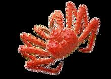 king crab.png