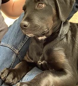 Meet Doug the Dog