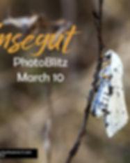 !salt marsh moth -1.jpg