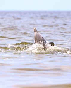 !Dolphins 5.jpg