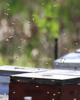 !Bees.jpg