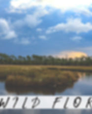 Wild Florida Pic.jpg