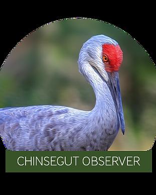 Chinsegut Observer Logo.png