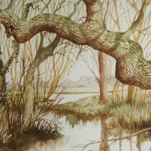 Elizabeth Tomkins -From the White Bridge