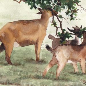 Elizabeth Tomkins-goats1.jpg