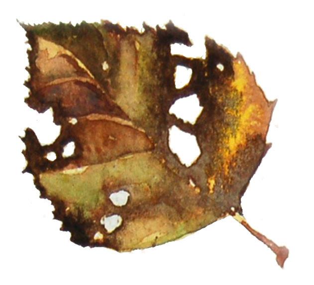 Elizabeth Tomkins - Leaf