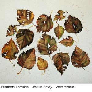 Elizabeth Tomkins -Nature Study