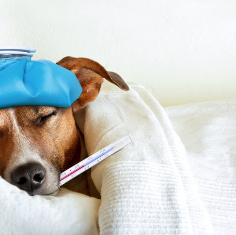 Flu or Cold Keeping You Down?