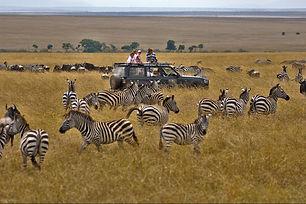 Destinations-in-Tanzania-The-Serengeti-N
