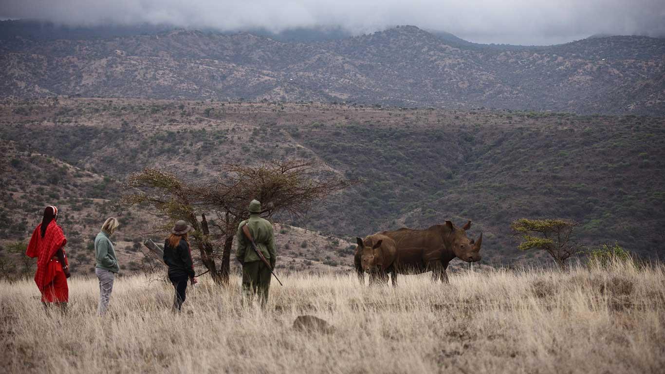 Lewa-Safari-Camp---Bush-Walk---Rhino.jpg