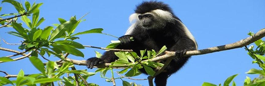 rwanda monkey.jpg