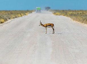 safaris.jpg