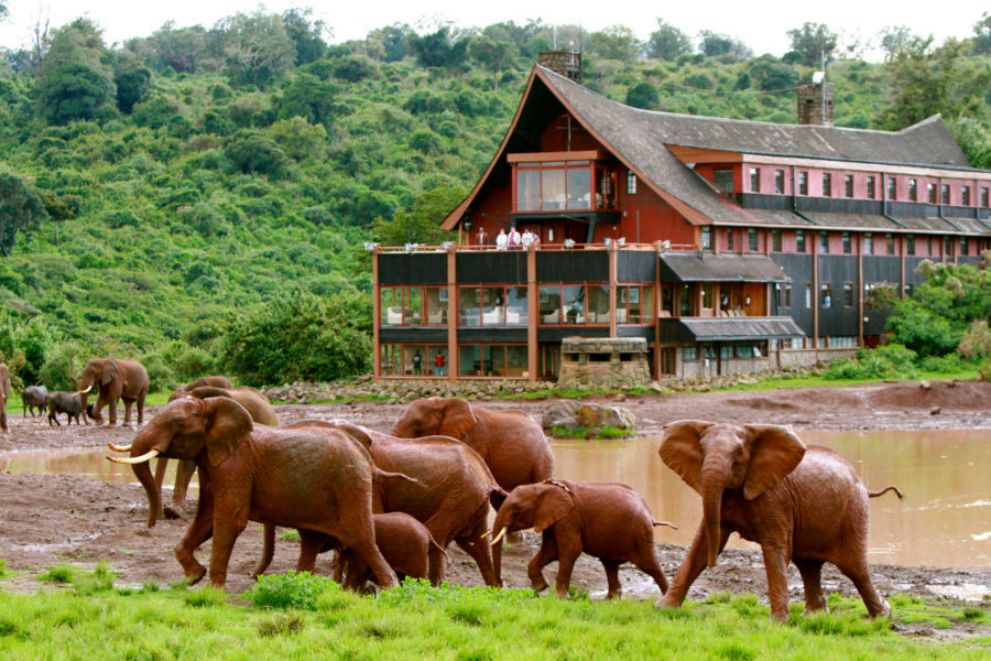 The Ark elephants