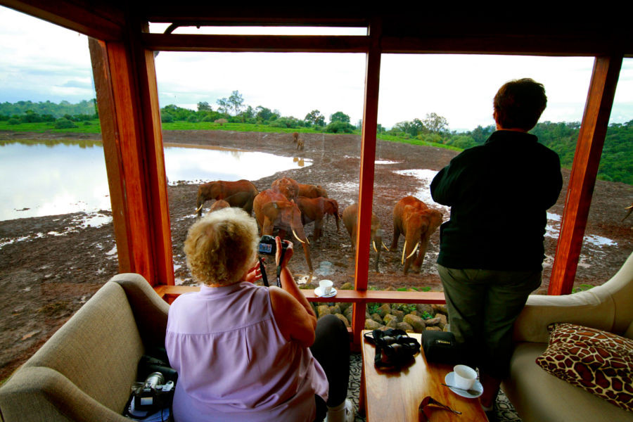 the ark game viewing
