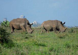 rhino-.jpg