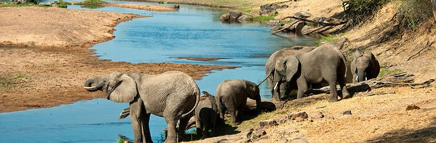 tz safari.jpg