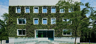 Green Wall.bmp