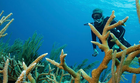 reef-scene-with-scuba-diver-and-staghorn