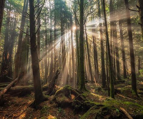 pacific-rim-rain-forest-GMV3LQT.jpg