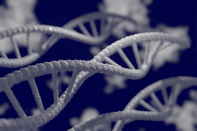 Lengths of DNA