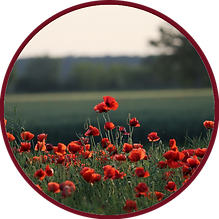 redbordered-poppies.png