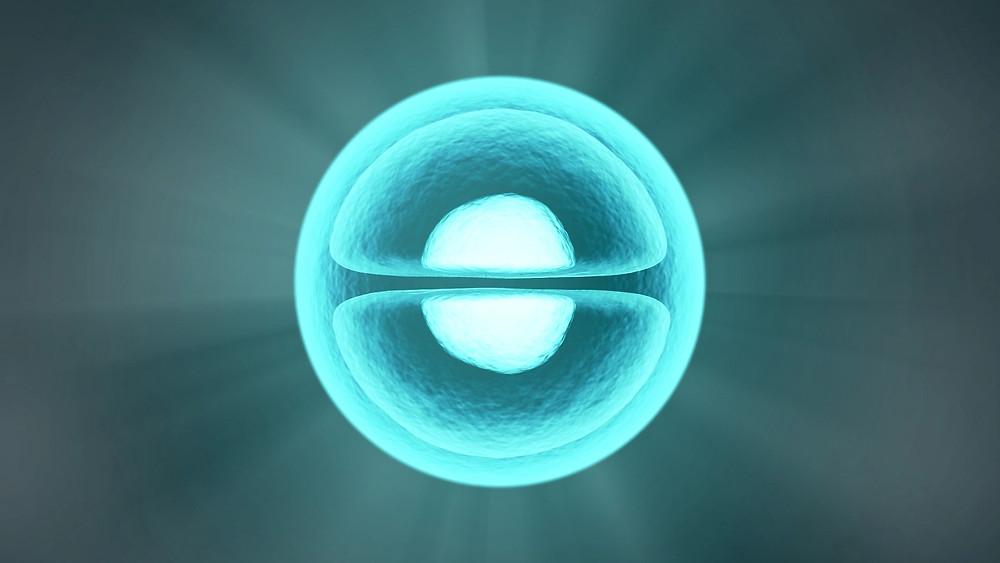 A Cell dividing - Sam Nash