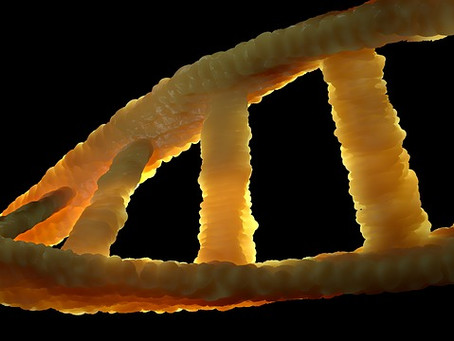 Dark DNA? Fascinating Title for a Mistake in Experimental Protocols.