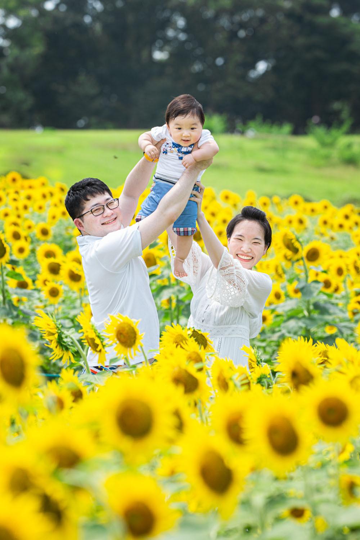 ひまわり畑で高いたかいのポーズをした家族を撮影した浜松カメラマンのファミリーフォト