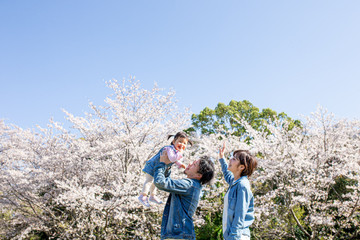 sakura-family-location-photo-134.jpg