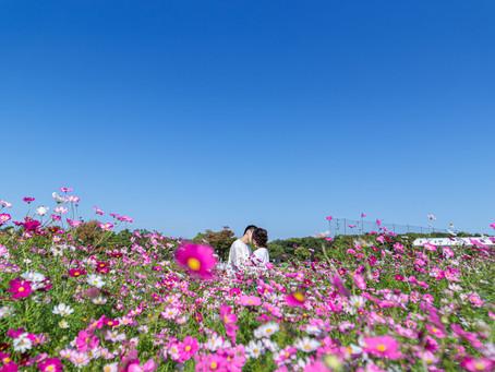【 浜名湖ガーデンパーク 】コスモス撮影会 vol.1