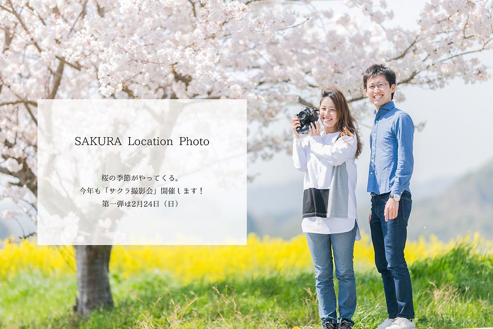 浜松市フォトアトリエフェリーチェのサクラ撮影会のお知らせ