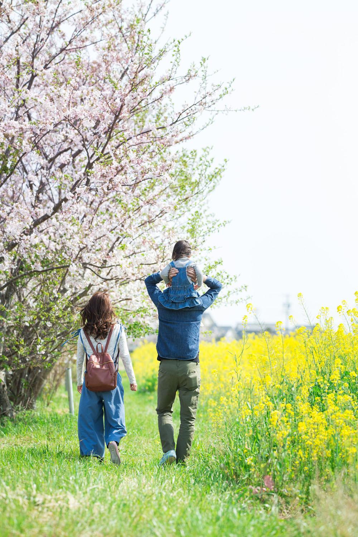 掛川市そよかぜ広場の桜と菜の花畑で撮影した家族写真
