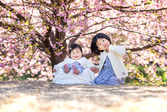 sakura-family-location-photo-082.jpg