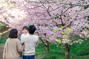 sakura-family-location-photo-103.jpg