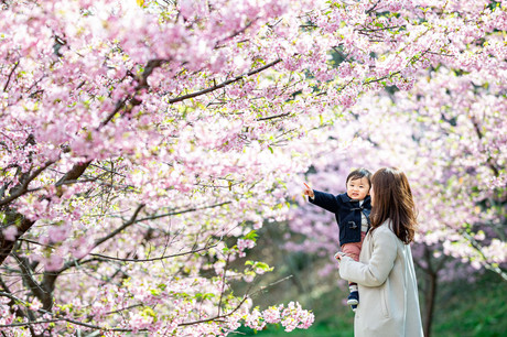 sakura-family-location-photo-044.jpg
