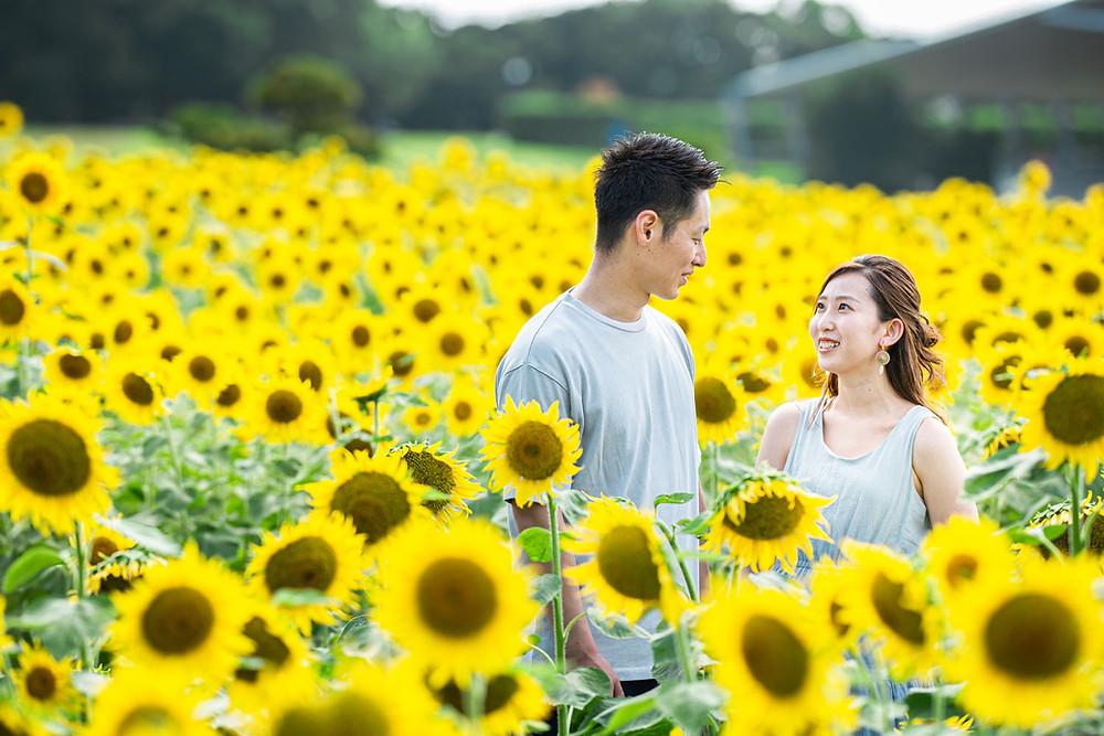 浜名湖ガーデンパークのひまわり畑で浜松のカメラマンが撮影したカップルのデート写真