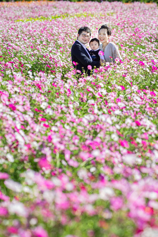 浜松のカメラマンがコスモス畑で撮影したファミリーフォト